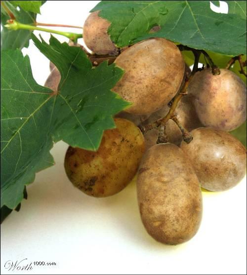Photoshop gyümölcs: szőlő-krumpli