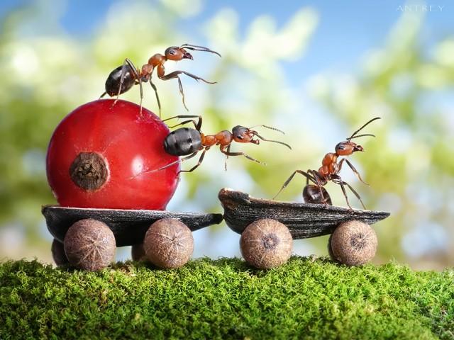 Andrey Pavlov - a hangyák világa (2)