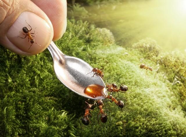 Andrey Pavlov - a hangyák világa (3)