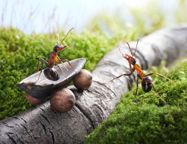 Andrey Pavlov - a hangyák világa (6)