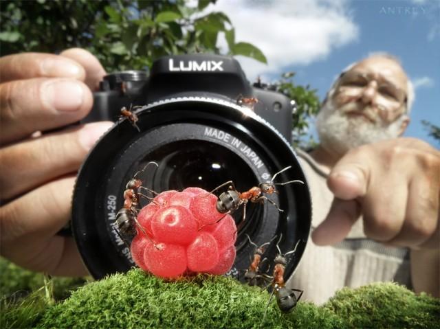 Andrey Pavlov - a hangyák világa (1)