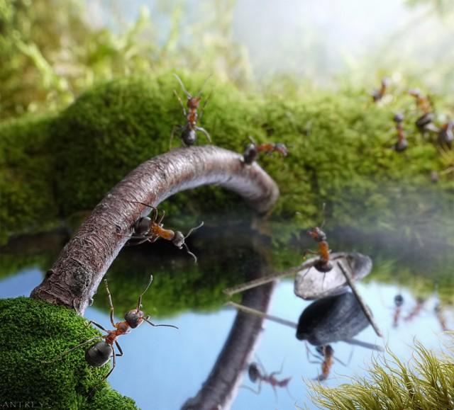 Andrey Pavlov - a hangyák világa (11)