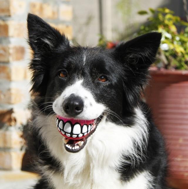 A mosolygós kutya labda 4