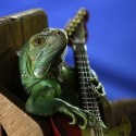 Állati gitár top 10