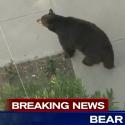 Az SMS és a medve, avagy az SMS-ezés veszélyei