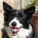 A mosolygásra késztető kutya játék